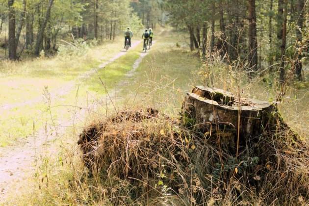 dviraciai 2