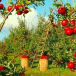 Daugiau kaip tūkstantis Lietuvos mokyklų ir darželių turės savo sodus